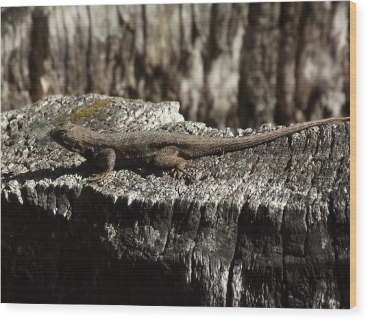 Lizard In Thought Wood Print by James Rishel