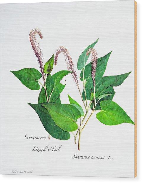 Lizard's-tail Wood Print