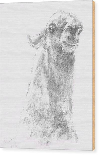 Llama Close Up Wood Print