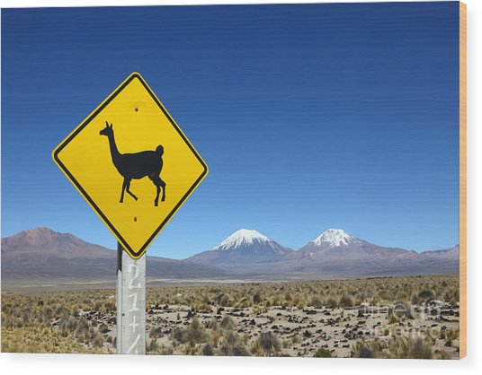 Llamas Crossing Sign Wood Print