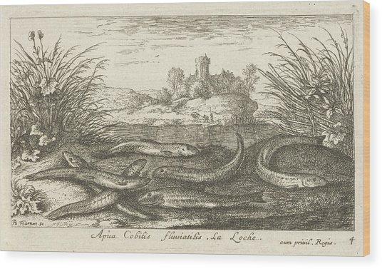 Loaches On A River Bank, Albert Flamen Wood Print by Albert Flamen
