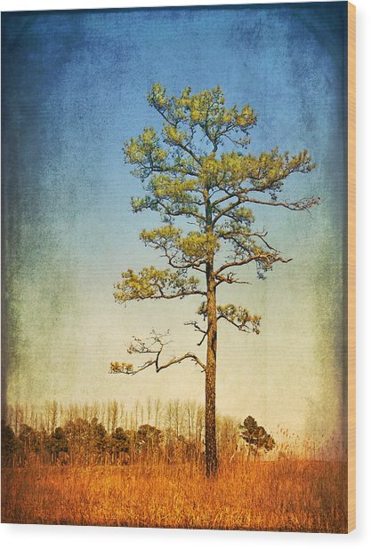 Loblolly Pine Along The Chesapeake Wood Print