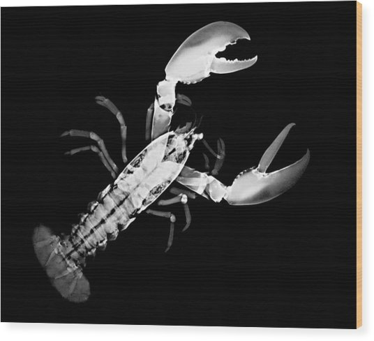 Lobster Wood Print by William A Conklin