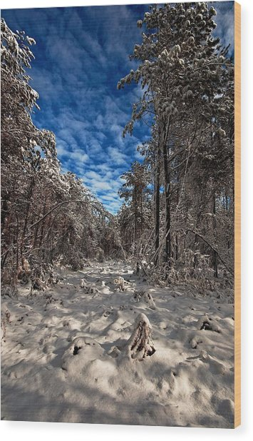 Logging Trail  Wood Print