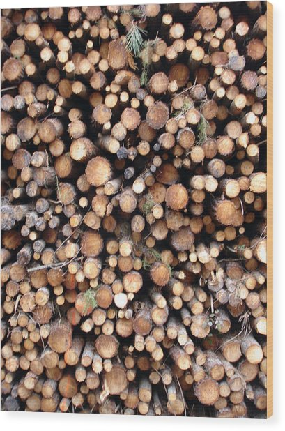 Logs Wood Print by Michel Mata