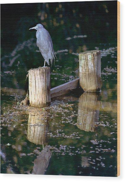 Lone Bird Wood Print
