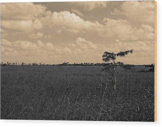 Lone Cypress II Wood Print