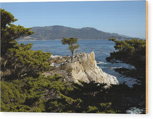 Lone Cypress On 17-mile Drive  Wood Print