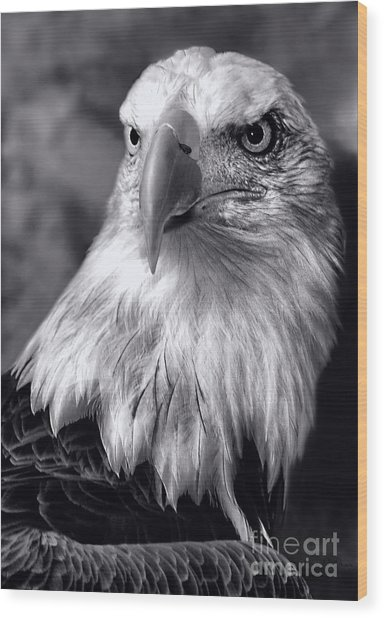 Lone Eagle Wood Print