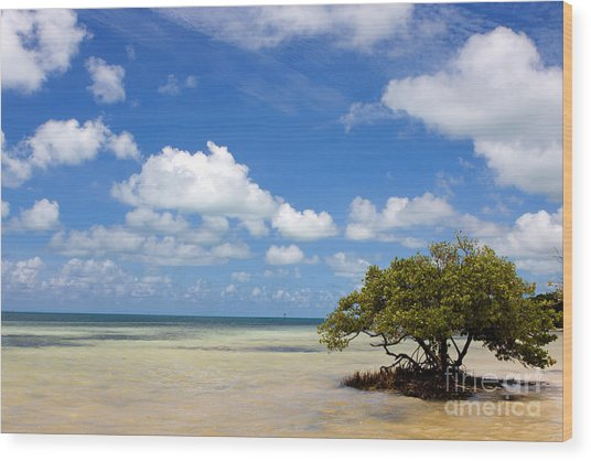 Lone Mangrove Tree Florida Keys Wood Print