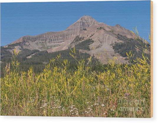 Lone Mountain And Wildflowers Wood Print