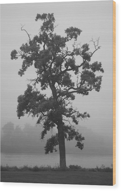 Wood Print featuring the photograph Lone Oak by Viviana  Nadowski