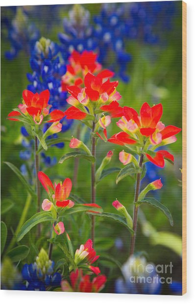 Lone Star Blooms Wood Print