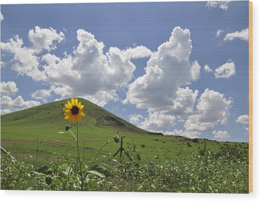 Lone Sunflower Wood Print