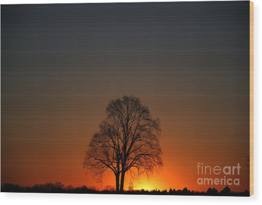 Lone Tree At Sunrise Wood Print
