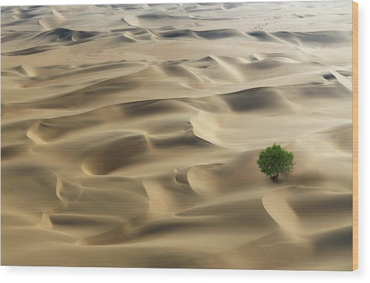 Lone Tree In A Desert Wood Print by Buena Vista Images