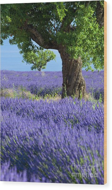 Wood Print featuring the photograph Lone Tree In Lavender by Brian Jannsen