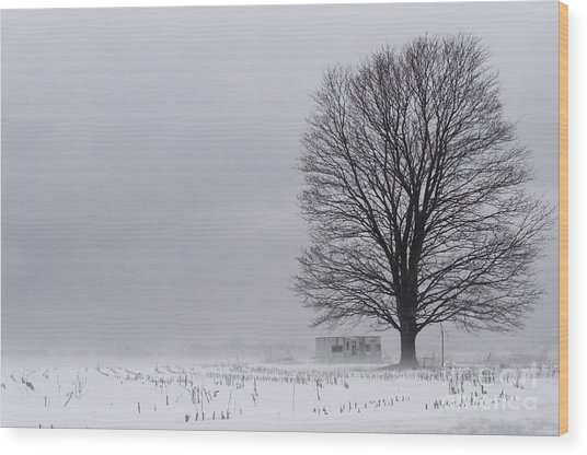 Lone Tree In The Fog Wood Print