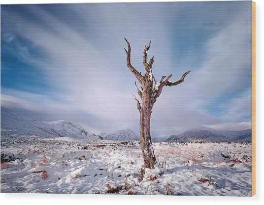 Lone Tree In The Snow Wood Print
