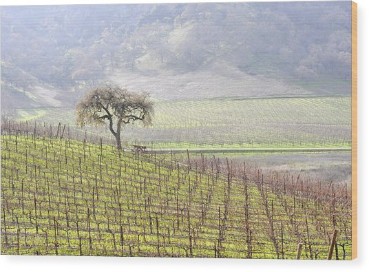 Lone Tree In The Vineyard Wood Print