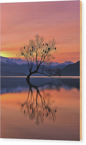 Lone Tree Is Not Lonely Wood Print