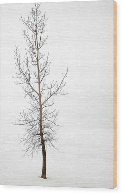 Lone Tree On The Ottawa River Shoreline Wood Print