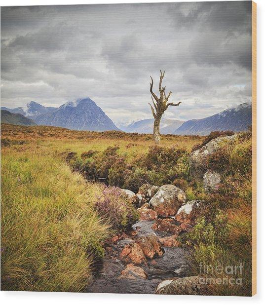 Lone Tree Rannoch Moor Scotland Wood Print by Colin and Linda McKie