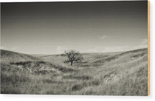 Lone Tree Winter Wood Print