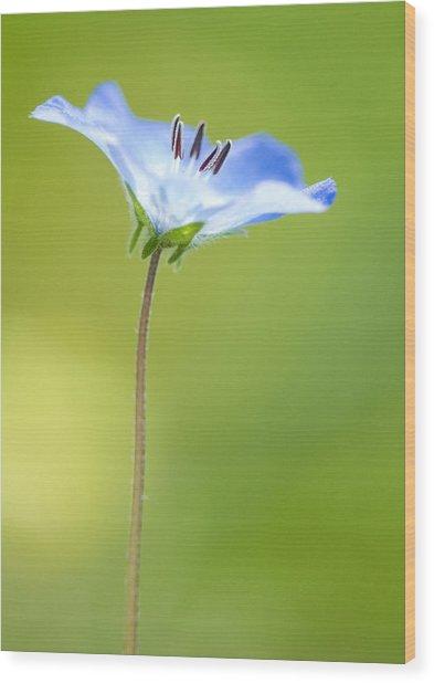 Lone Wildflower Wood Print by Bill LITTELL