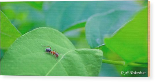 Lonely Ant Wood Print