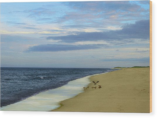 Lonely Cape Cod Beach Wood Print
