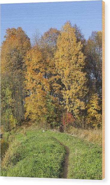 Lonely Dog In Autumn Wood Print by Aleksandr Volkov