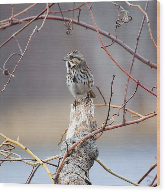 Lonely Sparrow Wood Print by Martin Goldenberg