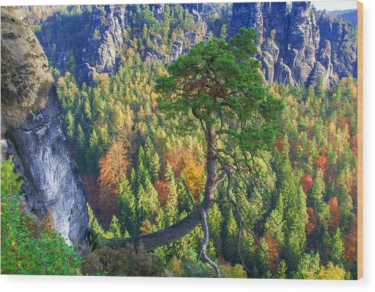 Lonely Tree In The Elbe Sandstone Mountains Wood Print