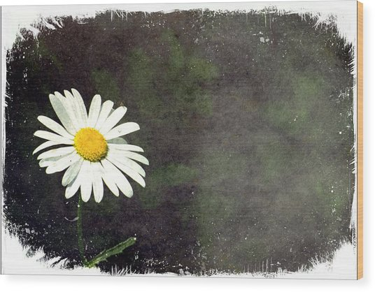Lonesome Daisy Wood Print