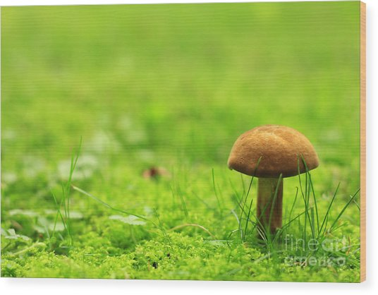 Lonesome Wild Mushroom On A Lush Green Meadow Wood Print