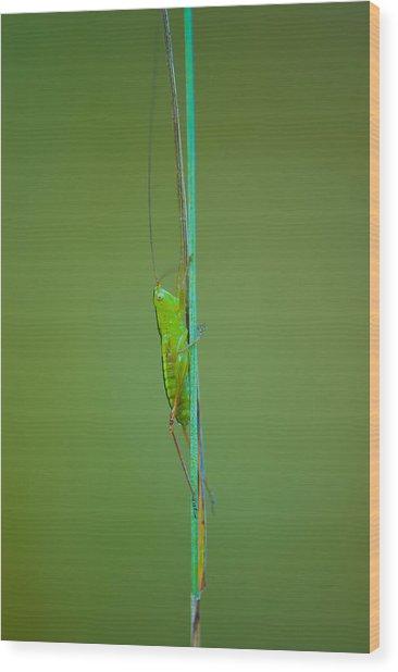 Long And Lean Wood Print by Sarah Crites