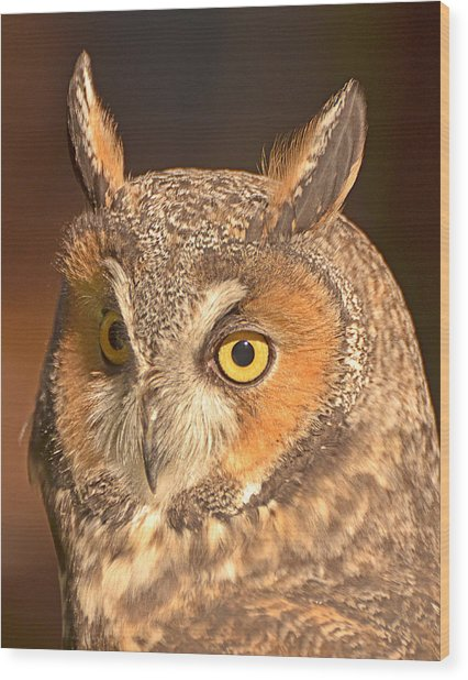 Long-eared Owl Wood Print