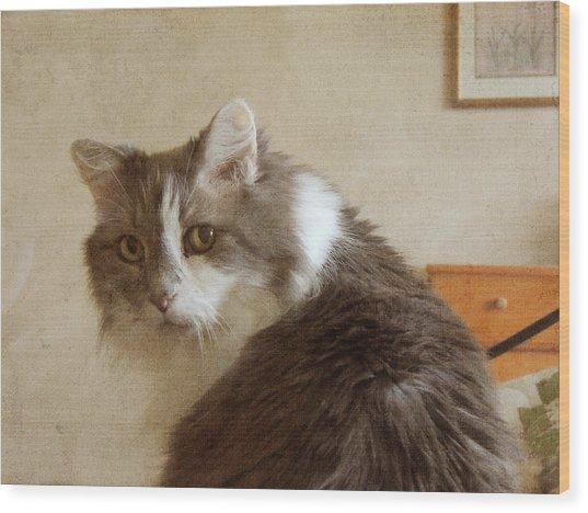 Long-haired Cat Portrait Wood Print