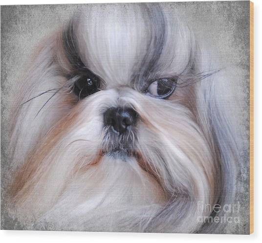 Long Haired Shih Tzu Wood Print