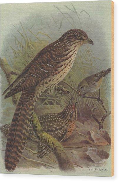 Long Tailed Cuckoo And Grey Warbler Wood Print