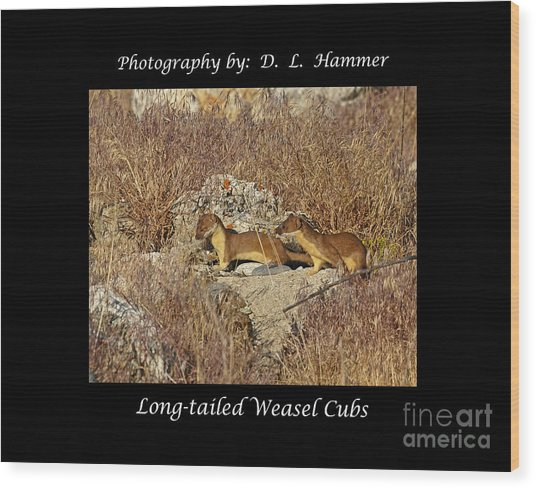 Long-tailed Weasel Cubs Wood Print by Dennis Hammer