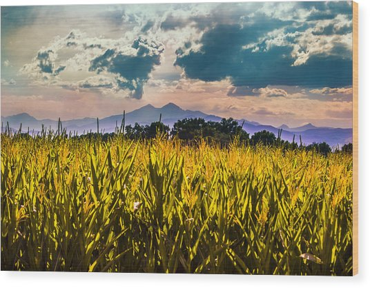 Longs Peak Harvest Wood Print by Rebecca Adams