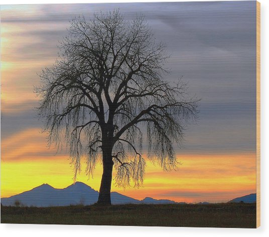 Longs Peak Sunset Wood Print by Rebecca Adams