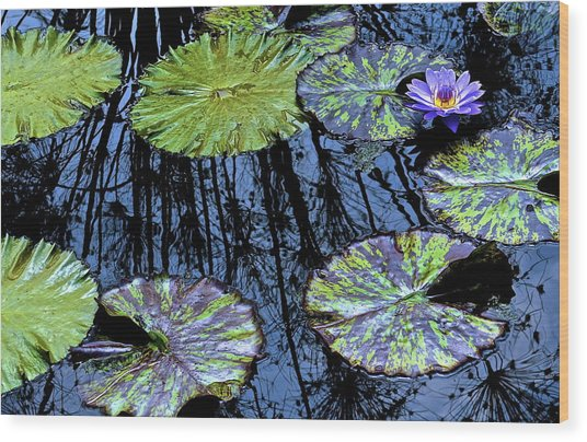 Longwood Lily Wood Print by Thomas Camp