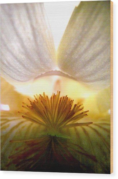 Look Inside The Iris Wood Print by Virginia Forbes