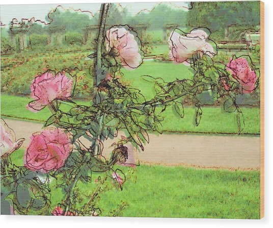 Looking Through The Rose Vine Wood Print