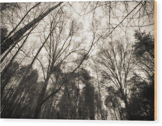 Looking Up At Trees Wood Print