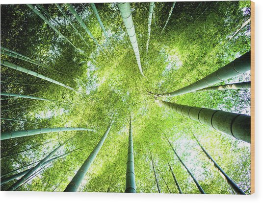 Looking Up In The Bamboo Grove Wood Print by Marser