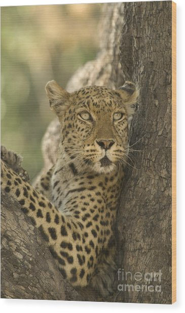Lookout Wood Print by Wayne Bennett